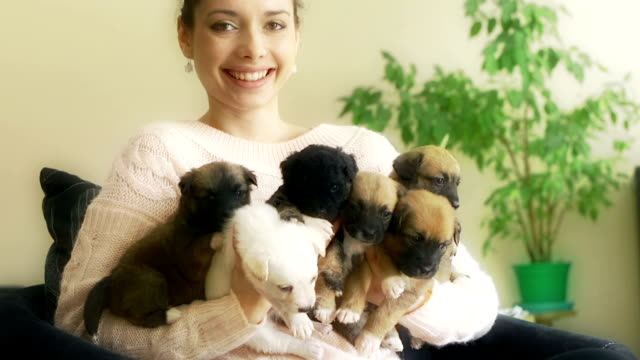 girl and puppies - large group of animals stock videos & royalty-free footage