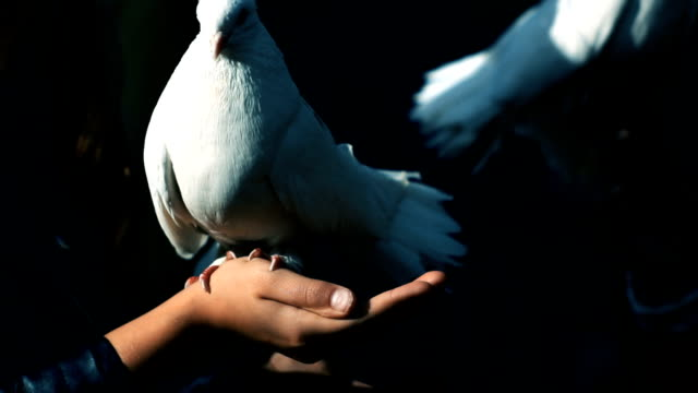 Girl and white dove