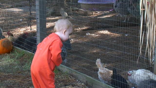 stockvideo's en b-roll-footage met girl at zoo - minder dan 10 seconden