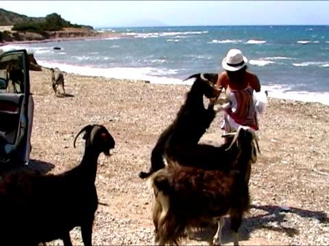 vídeos de stock, filmes e b-roll de garota foram perseguidos pela fome de cabra - animal doméstico