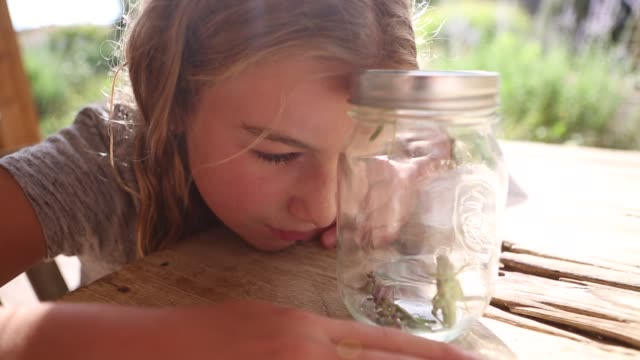 girl capturing grasshoppers in garden - girls wearing see through clothes stock videos and b-roll footage