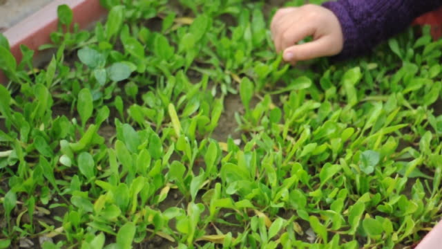 girl caring vegetable plant in garden - plant nursery stock videos and b-roll footage