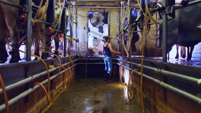 Girl Checking Machinery During Milking in Small Dairy