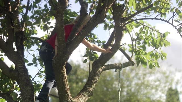 girl climbing a tree, sweden. - climbing stock videos & royalty-free footage