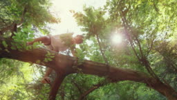 Girl climbing up a fallen tree in the forest in sunshine