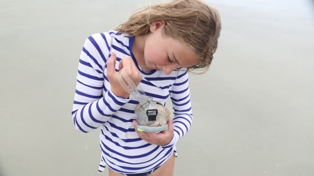 girl collecting sea shells