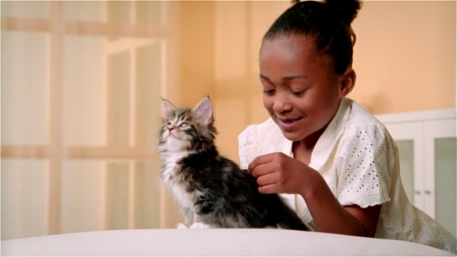 cu, girl (6-7) combing maine coon kitten - viziarsi video stock e b–roll