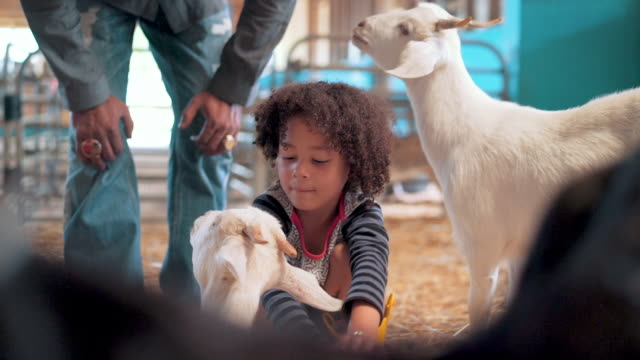 stockvideo's en b-roll-footage met meisje knuffelen kid geit in een schuur - ranch