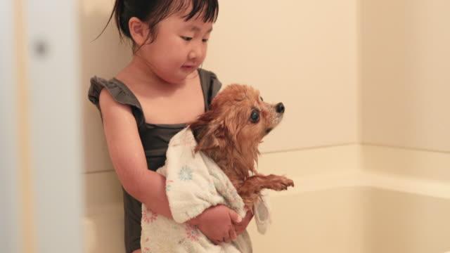 vídeos de stock, filmes e b-roll de menina secando cachorro no banheiro - domestic bathroom