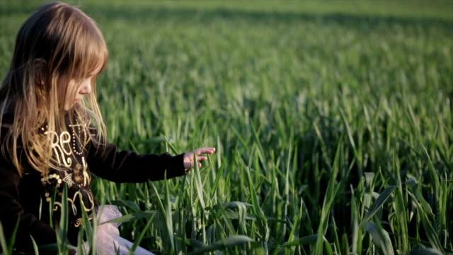 女の子 小麦のフィールドがお楽しみいただけます。 - 穀物 ライムギ点の映像素材/bロール