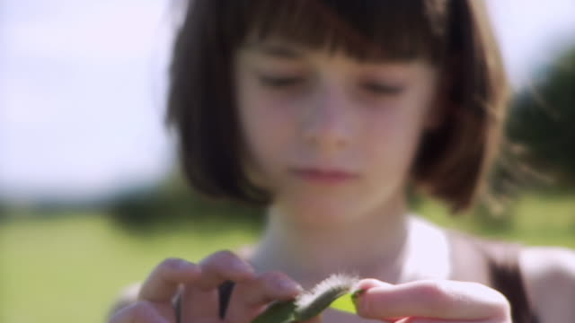 SLO MO CU R/F Girl (8-9) examining caterpillar on leaf / Hampton, New Jersey, USA