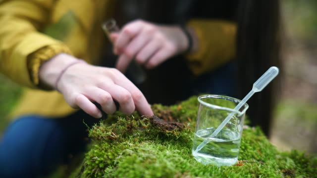 girl explorer collecting moss sample for stem research - moss stock videos & royalty-free footage