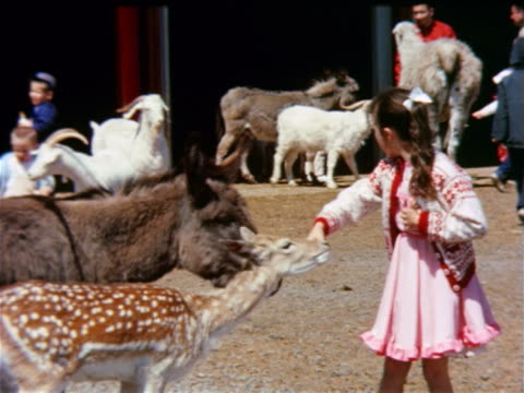 1963 girl feeding bottle to deer standing next to donkey at petting zoo / Lollypop Farm, NY