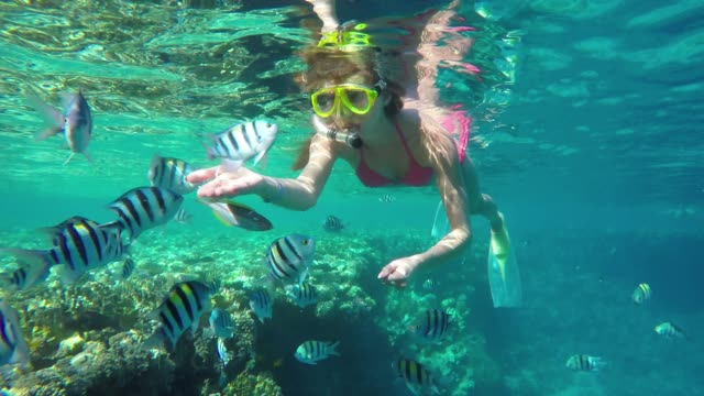 girl feeding fish in the sea. - tropical fish stock videos & royalty-free footage