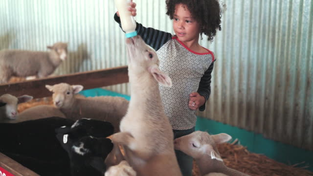 Girl feeding goats with milk in baby bottle