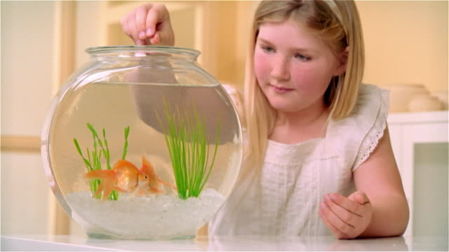 cu, girl (8-9) feeding goldfish in fishbowl - fishbowl stock videos and b-roll footage