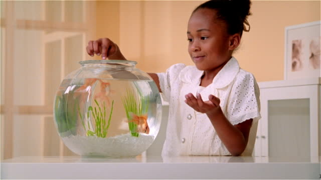 vidéos et rushes de cu, girl (6-7) feeding goldfishes in fishbowl - animaux de compagnie