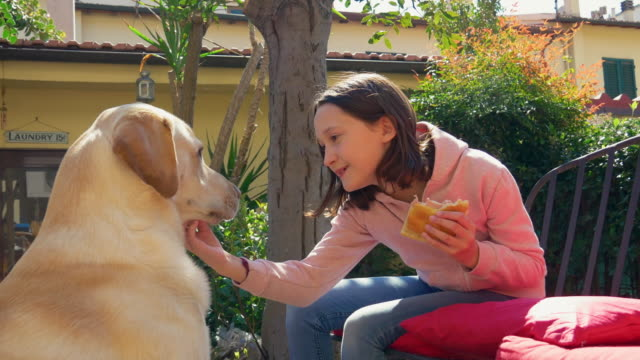 girl feeding labrador on patio - 10 11 jahre stock-videos und b-roll-filmmaterial