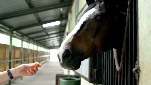 girl feeds horse - carrot stock videos & royalty-free footage