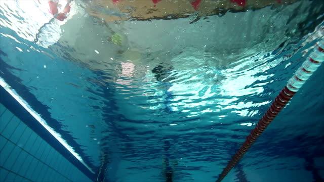 vídeos de stock e filmes b-roll de menina freediving na piscina - cetáceo