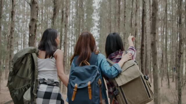vídeos de stock e filmes b-roll de girl friend group hiking in a pine forest - pine