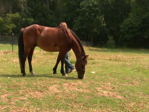 mädchen pflege horse ntsc - pferdeartige stock-videos und b-roll-filmmaterial