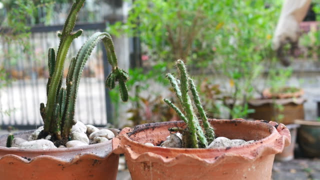 girl hand growing cactus - financial accessory stock videos & royalty-free footage