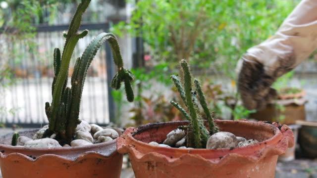 stockvideo's en b-roll-footage met meisje hand groeiende cactus - vetplant