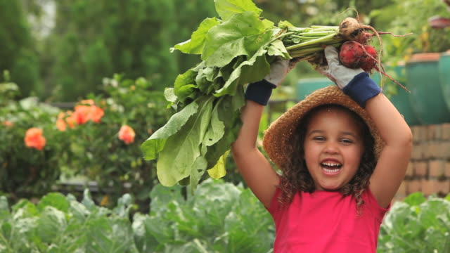 CU TU Girl (4-5) harvesting beets and laughing in garden / Richmond, Virginia, USA