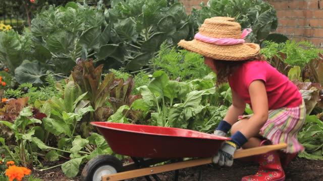 vidéos et rushes de ms pan girl (4-5) harvesting beets in vegetable garden / richmond, virginia, usa - jardin potager