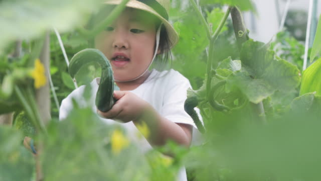 girl harvesting cucumber in the garden - simple living stock videos & royalty-free footage