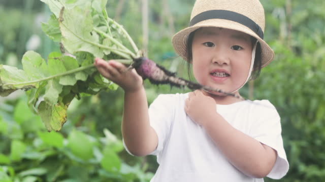 girl harvesting the kind of radish in the garden - simple living stock videos & royalty-free footage