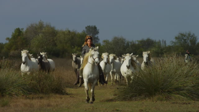 2 girl herders lead a group of white camargue horses trotting to camera - camargue stock-videos und b-roll-filmmaterial