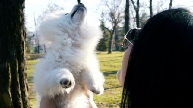 girl hold her dog, and play with him - black shirt stock videos & royalty-free footage
