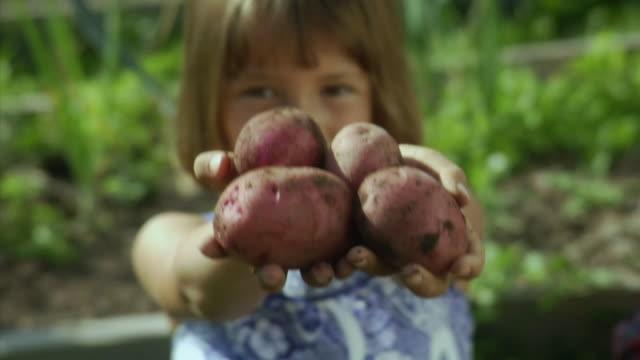 vidéos et rushes de cu girl (4-5) holding freshly harvested potatoes, bovina center, new york, usa - pomme de terre rouge