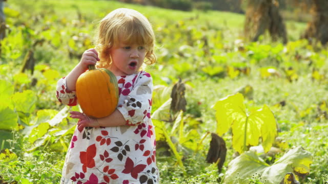 vidéos et rushes de ms girl (2-3) holding pumpkin, making face standing on field, manchester, vermont, usa - manchester vermont