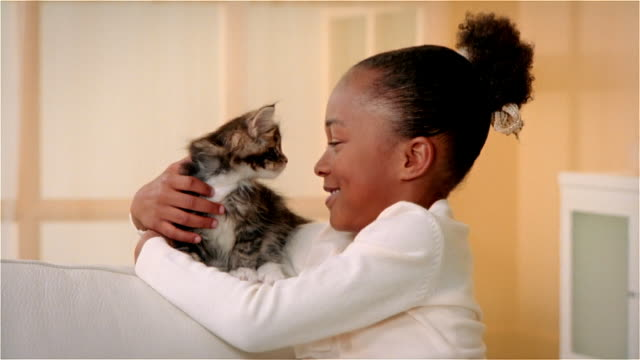 cu, girl (6-7) hugging maine coon kitten, portrait - stroking stock videos & royalty-free footage