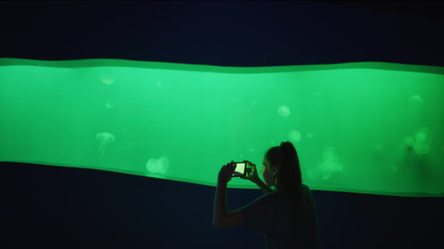 girl in aquarium recording jellyfish swimming with cell phone  / draper, utah, united states - fotografische themen stock-videos und b-roll-filmmaterial