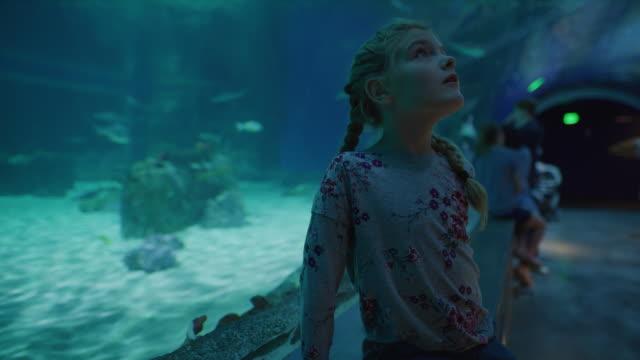 girl in aquarium watching fish swimming overhead / draper, utah, united states - group of animals stock videos & royalty-free footage