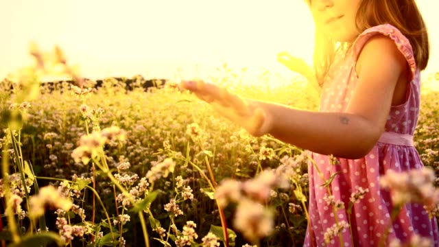 SLO MO Girl in the buckwheat field at sunset