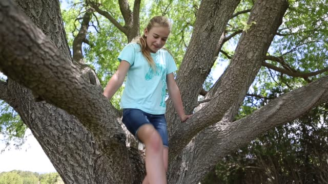 girl in tree - socke stock-videos und b-roll-filmmaterial