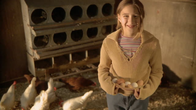 ms tu td girl (6-7) inside chicken coop carrying eggs in shirt and smiling / wilmington, illinois, usa - 鶏小屋点の映像素材/bロール