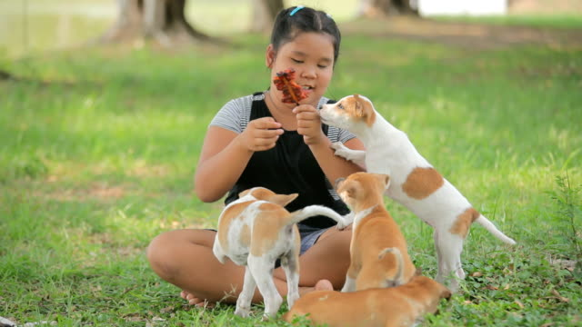 girl is feeding her puppy dog - overweight dog stock videos & royalty-free footage