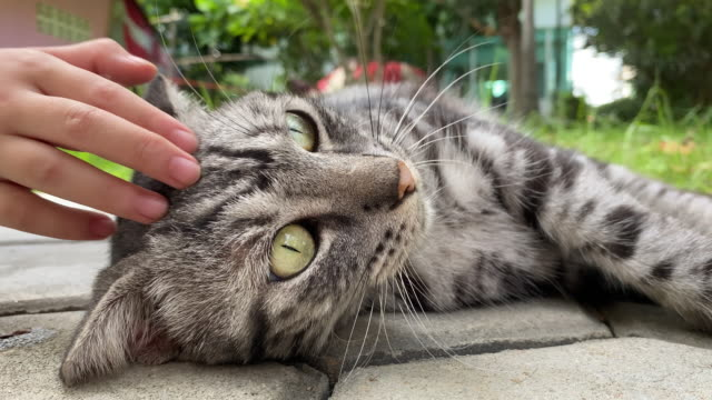 girl is stroking cat while animal is enjoying love and tenderness - grey colour stock videos & royalty-free footage