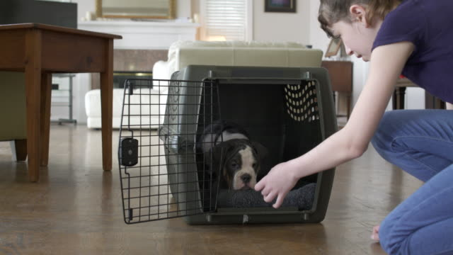 girl letting a dog out of a travel kennel - gabbietta per animali video stock e b–roll