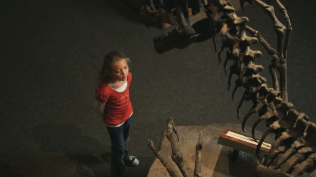 MS HA Girl (8-9) looking at dinosaurs skeleton in natural history museum, Lehi, Utah, USA