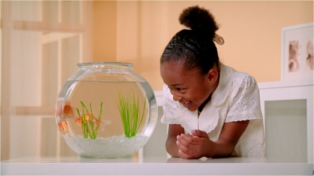 cu, girl (6-7) looking at goldfishes in fishbowl - fish tank stock videos & royalty-free footage