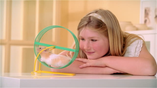 cu, girl (8-9) looking at hamster in exercise wheel - going round in circles stock videos and b-roll footage