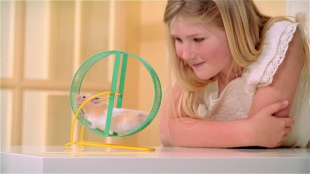 vídeos y material grabado en eventos de stock de cu, girl (8-9) looking at hamster in exercise wheel - hamster