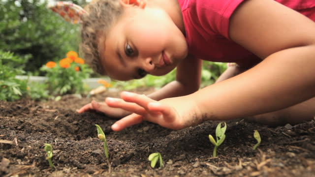 CU Girl (4-5) looking at seedling in garden / Richmond, Virginia, USA